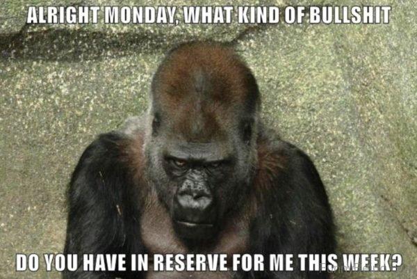 Alright Monday What Kind Of Bullshit