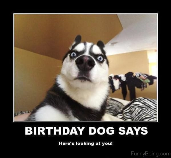 Birthday Dog Says
