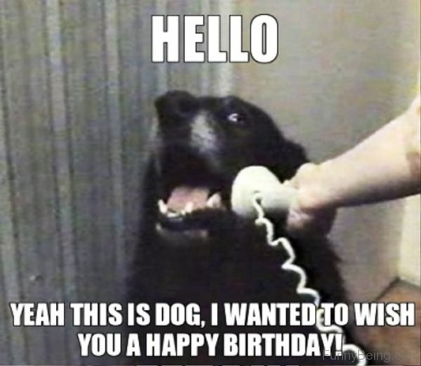 Hello, Yeah This Is Dog