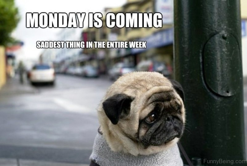 Happy Monday Meme Funny : Best weekday quotes images funny stuff good