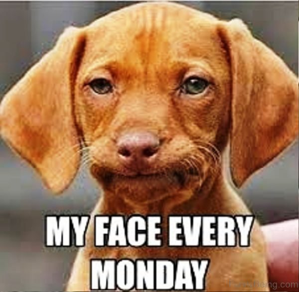 My Face Every Monday