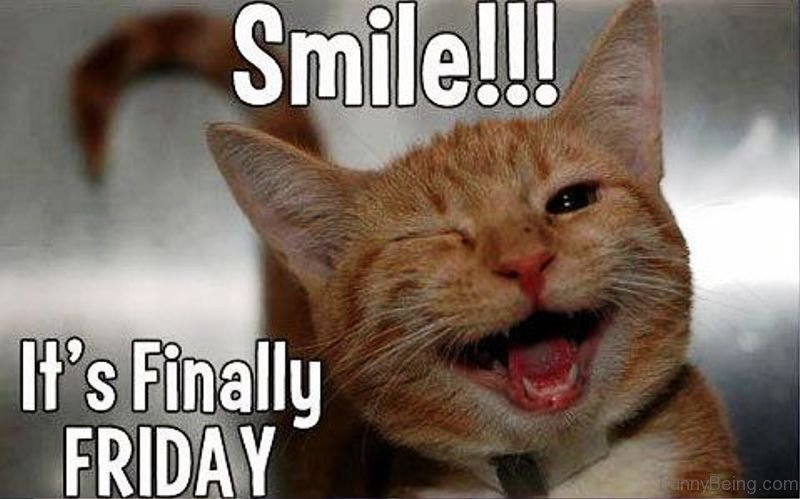 55 Crazy Friday Memes