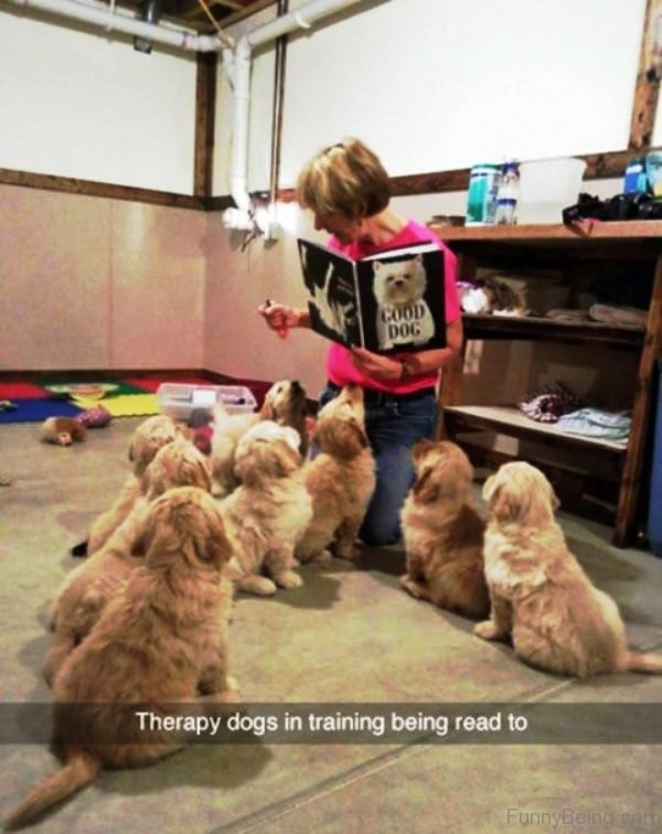 Therapy Dogs In Training Being Read To