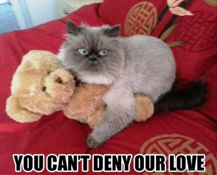 Funny Meme On Love : 50 funniest love memes
