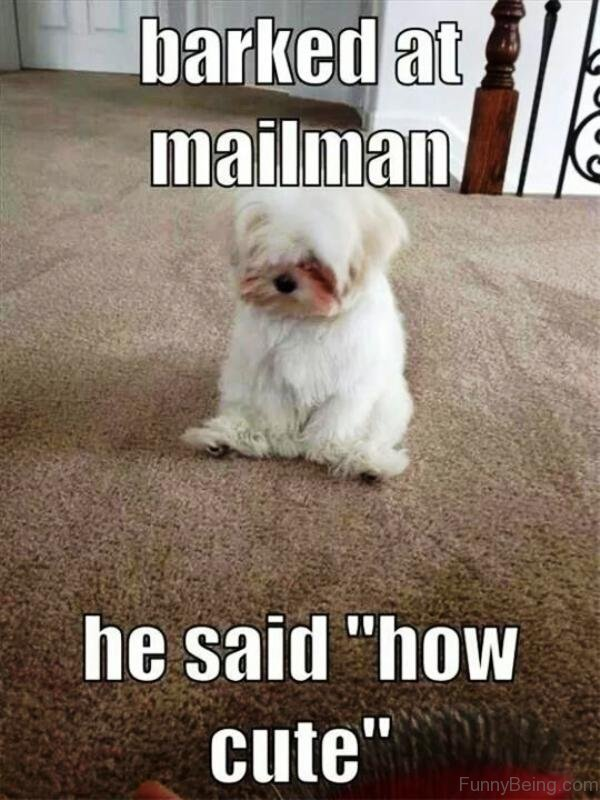 Barked At Mailman
