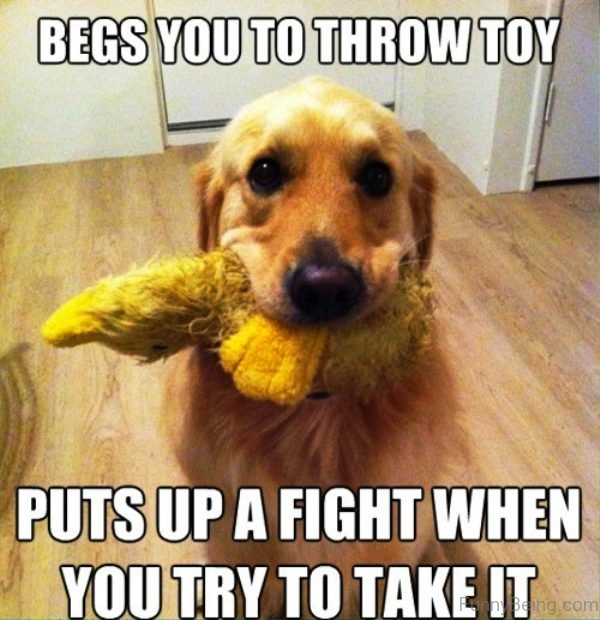 Begs You To Throw Toy