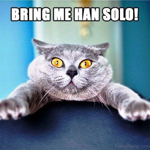Bring Me Han Solo