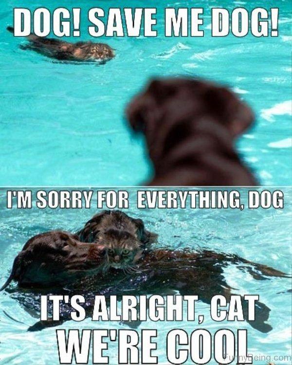 Dog, Save Me Dog