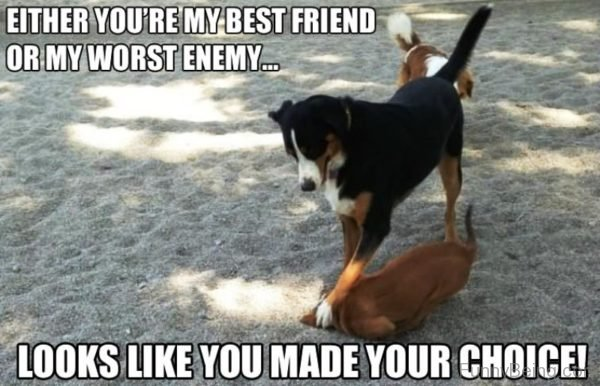 Either You're My Best Friend
