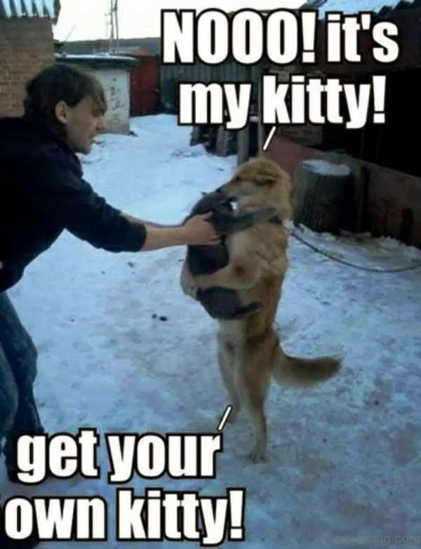 Get Your Own Kitty