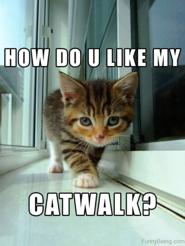 How Do You Like My Cat Walk