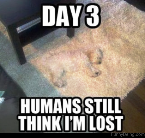 Humans Still Think I'm Lost