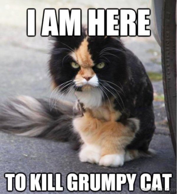 I Am Here To Kill Grumpy Cat