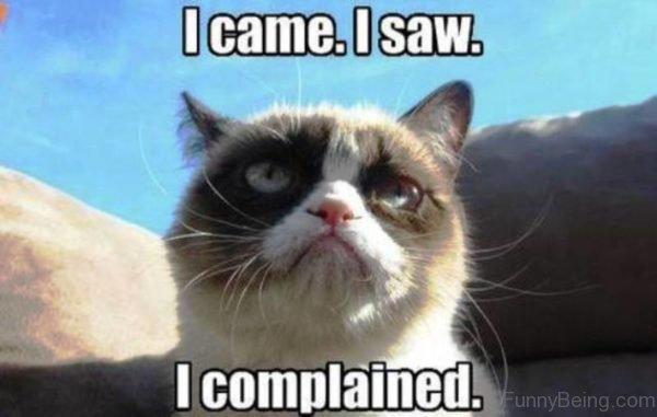 I Came I Saw 600x381 110 lovely cat memes