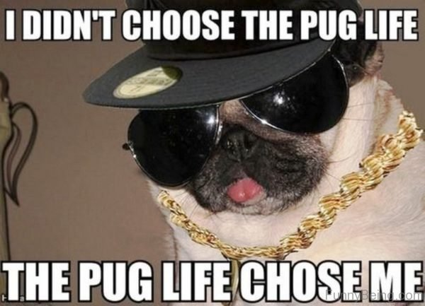 I Didn't Choose The Pug Life 1
