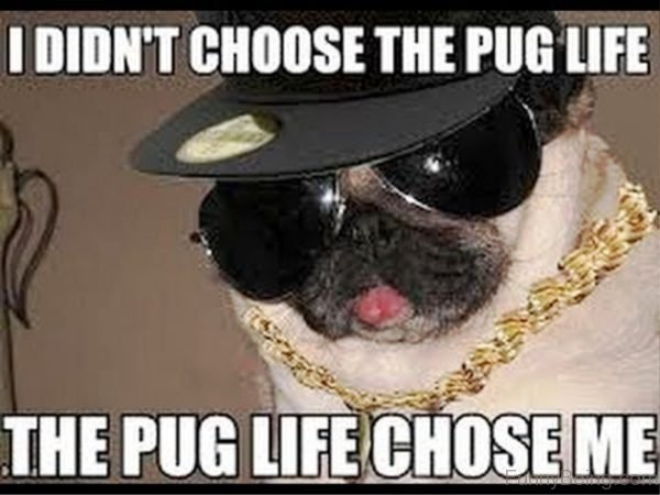 I Didn't Choose The Pug Life