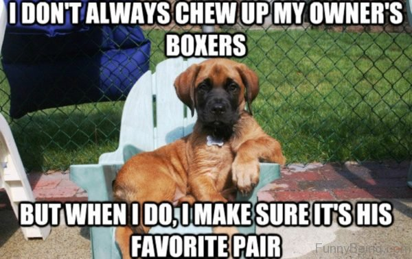 I Don't Always Chew Up