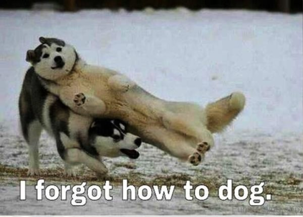 I Forgot How To Dog