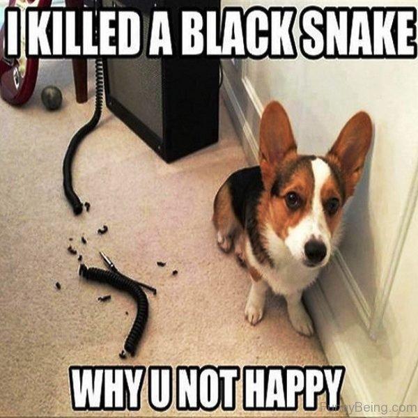 I Killed A Black Snake