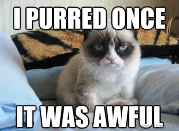 I Purred Once