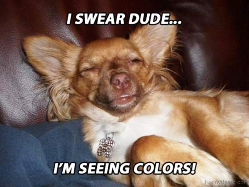 Funny Animal Memes For Adults : Funny dog memes imgflip