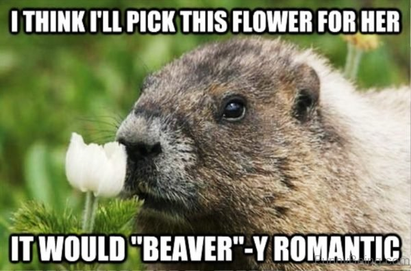I Think I'll Pick This Flower For Her