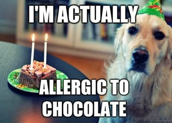 I'm Actually Allergic To Chocolate