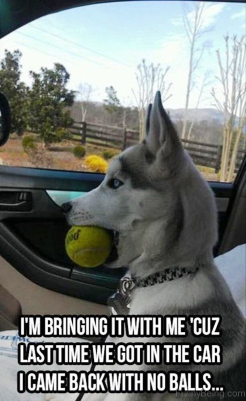 50 funny dog memes you need to see