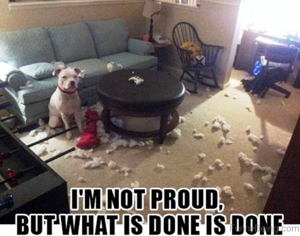 50 Funny Dog Memes You Need To See | 600 x 473 jpeg 56kB