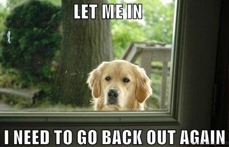 Funny Dog Meme Images : 50 funniest dog memes of all time