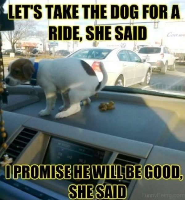 Lets Take The Dog For A Ride