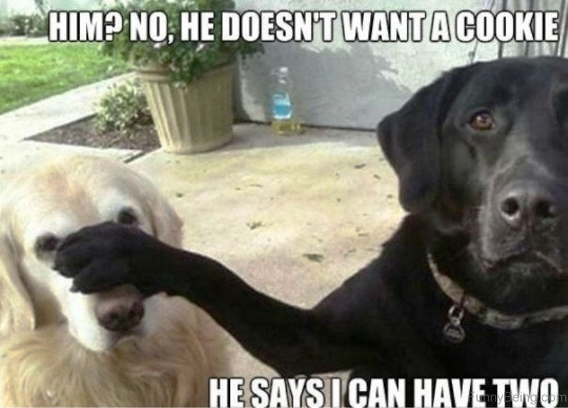 Funny Clean Memes 2015 : Funniest dog memes of all time