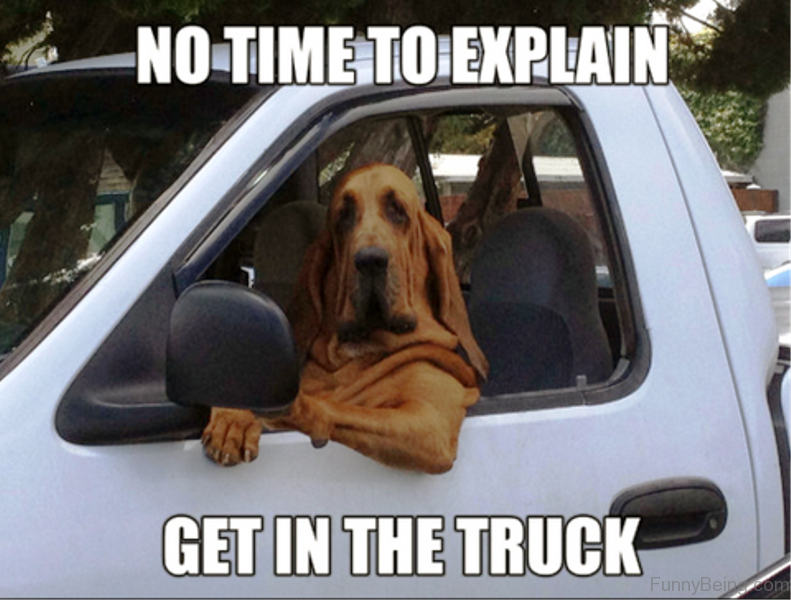 Funniest Meme All Time : Funniest dog memes of all time