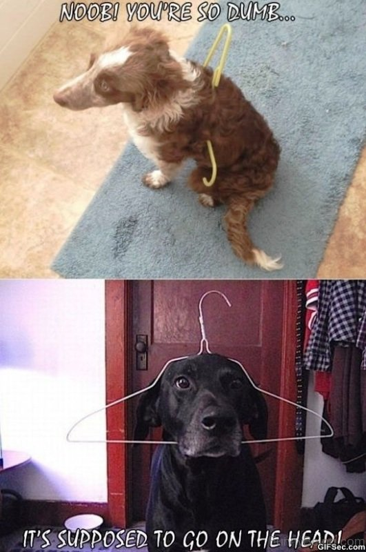 50 Funniest Dog Memes Of All Time