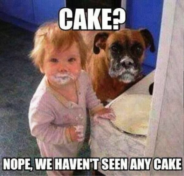 Nope We Haven't Seen Any Cake
