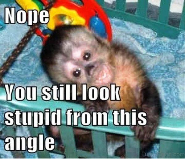 Nope You Still Look Stupid