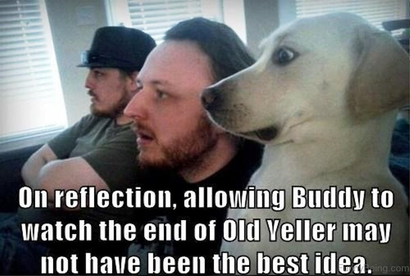 Top 50 Funniest Memes Of All Time : Funniest dog memes of all time