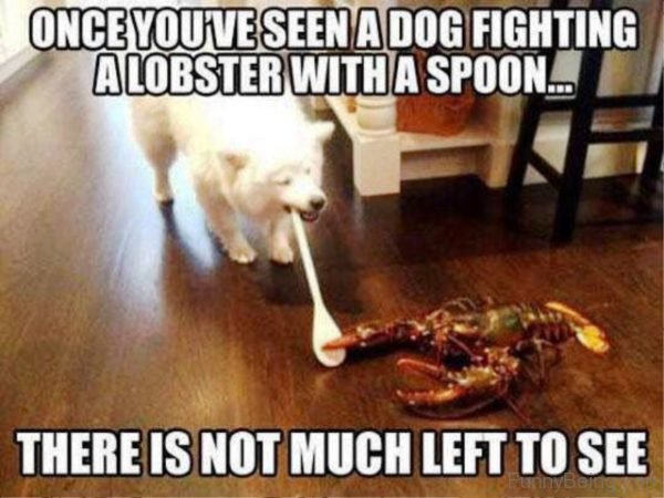 Once You've Seen A Dog Fighting