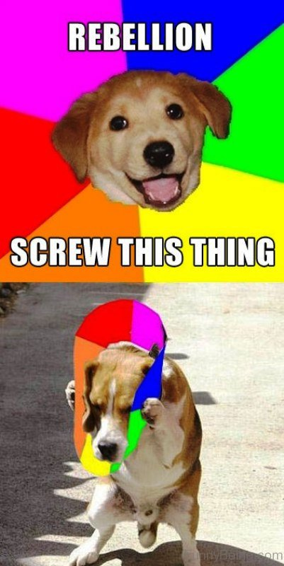 Rebellion Screw This Thing 50 funniest dog memes of all time