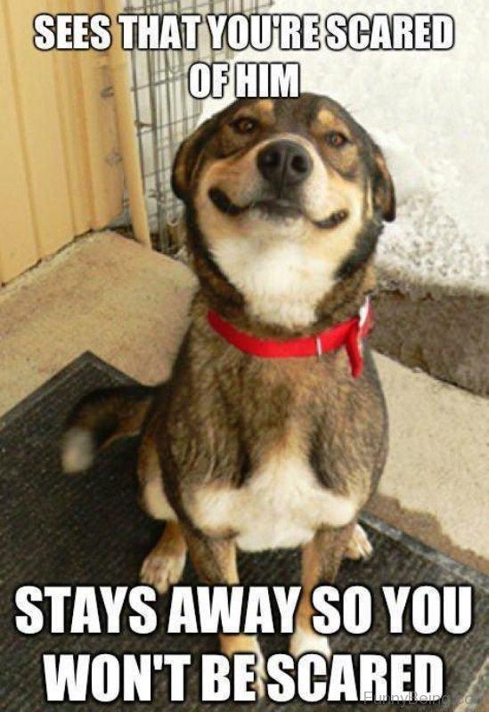 Stupid Dog Face Meme