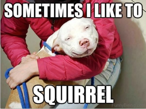 Sometimes I Like To Squirrel