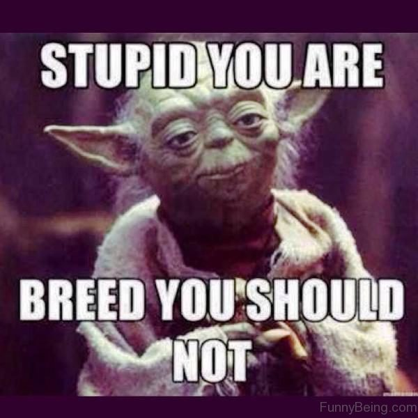 Stupid You Are