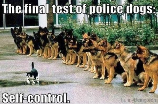 The Final Test Of Police Dogs