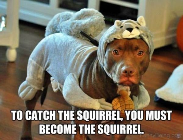 To Catch The Squirrel