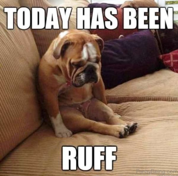 Today Has Been Ruff