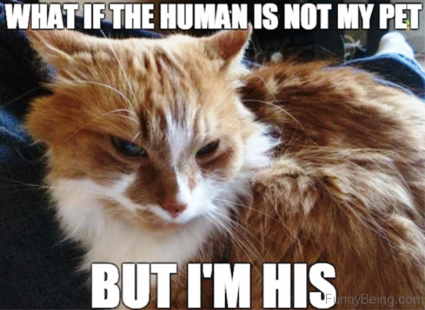 What If The Human Is Not My Pet