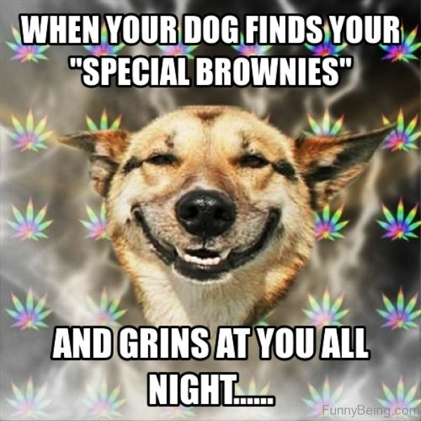 When Your Dog Finds Your Special Brownies