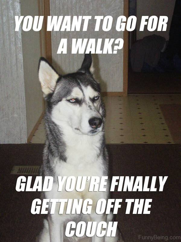 You Want To Go For A Walk