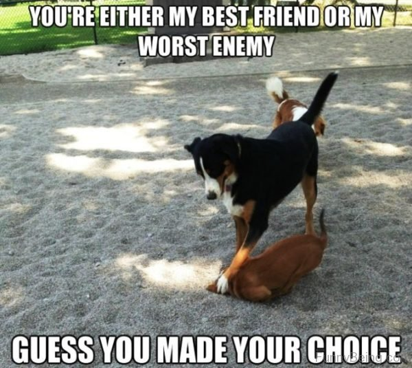 Youre Either My Best Friend