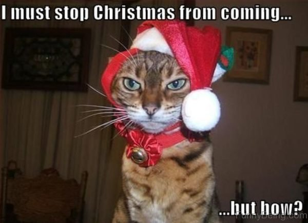 Funny Memes Xmas : Funny christmas memes jokes pictures